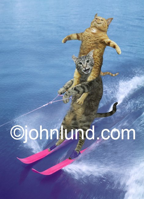 Funny animal stock photo of two cats water skiing, one riding on the shoulders of the other. They are on bright pink water skis.