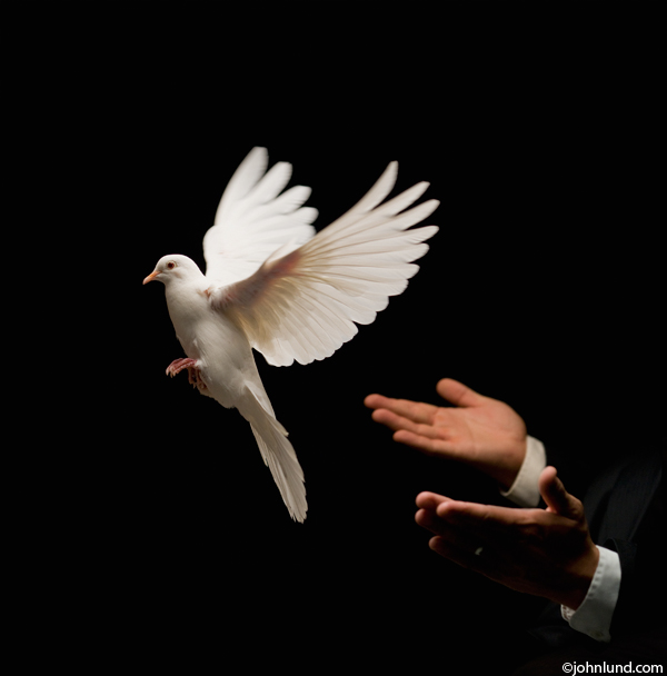Photograph Of A White Dove Caught In Flight As It Is Released In A