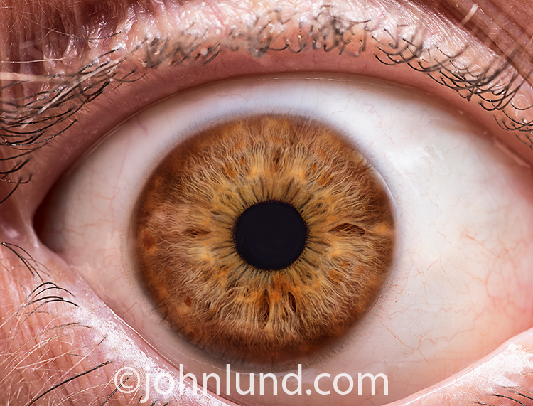 A person's brown eye is open as wide as can be in this stock photo about surprise, shock, alertness, vision and more.