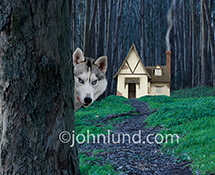 A wolf peeks out from behind trees and in front of a cottage, grandma's house perhaps, in the dark woods.