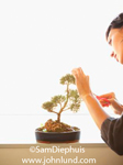 Stock photo of a woman with sicssors trimming her minature bonsai tree. Woman only partially visible with the Bonsai plant centered in the photo.  White background.