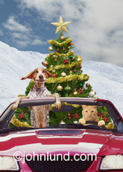 A German Short Haired Pointer and an Orange Tabby drive a convertible with a Christmas tree in back in a funny animal picture.