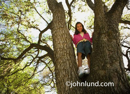 Picture of a young girl climbing in a huge tree.  Young hispanic or Mexican girl standing in the crook high up in a big old tree. She is smiling down at the camera. The young girl has on a pink sweater.  Pics of girls climbing trees for advertising.