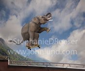An elephant gets air as he arcs through the sky over a railing on his skateboard in a display of nimble athletic skills.  Funny elephant picture.