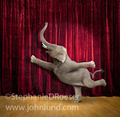 An elephant strikes a Ballet pose on stage in this funny elephant picture and stock photo about agility, grace and the improbable.