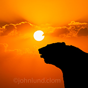 A bear is silhouetted against a brilliant orange sunset in a stock photo that can illustrate virtually any bear-related concept be it a bear market or bears in the wild.