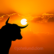 A bull market stock photo shows a bull majestically silhouetted against a vivid orange sunset.