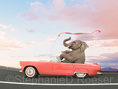 A happy elephant speeds by in a pink convertible in this humorous greeting card and stock photo image by Stephanie D. Roeser, an image that uses humor to address concepts such as speed, possibilities, and the unexpected.
