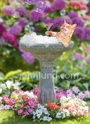 A cat lies back in a bird bath, a buble bath bird bath, and sips a martini in this funny cat photo for humorous greeting card and stock photo uses.