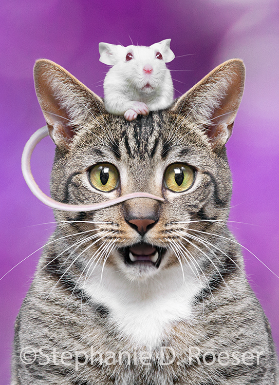 A tail of cat and mouse friends, this humorous cat greeting card and stock photo by Stephanie D. Roeser shows an adorable little mouse resting on top of a cat's head, and with his little mouse tail resting on the cat's nose!