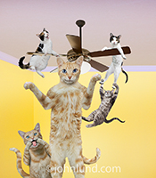 Cats will be cats as evidenced in this funny cat photo featuring cats hanging from a ceiling fan, making faces, and generally going bonkers