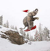In this humorous stock photo and greeting card image an elephant is seen snowboarding over a jump in the unexpected. The image is punctuated by the red snowboard and the red Santa Hat flying off his skull against a snowy, winter background.