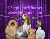Three dogs and two cats sing together in sweet harmony in this funny cat and dog picture of performing pets.