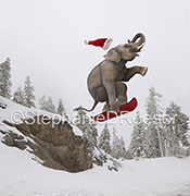An elephant, riding a snowboard, soars over a snow laden jump, Santa hat flying off, in an hilarious Christmas and stock photo image.