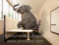 In this funny picture an elephant isn't just in the room, he is sitting on a man's lap as well!