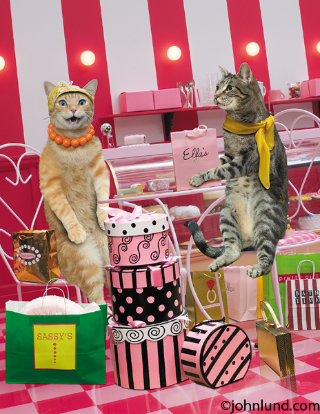 funny cat pictures of maude and a friend seated in a cafe surrounded