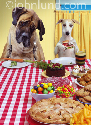 Funny photo of dieting dogs at a table covered with delicious looking food. An animal antics photo featuring a Mastiff and whippet.