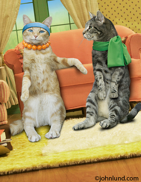 Maude the cat and a friend relax in Maude's living room in a funny cat pic created for humorous greeting cards.