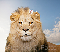 In a new twist on the theme of the Lion and the Mouse, an unlikely friendship, the mouse in this stock photo is comfortably seated in the mane of this King of Beasts!
