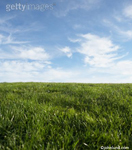 Stock shot of grass against a blue sky. grass as far as you can see in this very low angle picture.