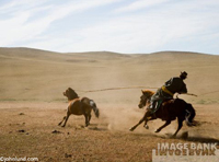 Picture of a Mongolian cowboy roping a horse from astride another horse. Mongolian's use ropes on the end of long poles.