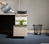 Picture of a plant in a desk drawer being watered by a galvanized metal watering can held by a human hand.