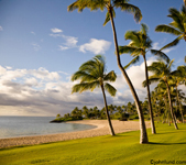 Beautiful picture of palm trees along a tropical beach in the tropics. A green manicured lawn leads us to a pristine beach in this picture.