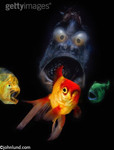 A woeful goldfish surrounded by evil looking monster fish from the deep, fish are real, scene is not.