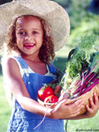 This young girl holds a basket full of freshly picked produce. The cute little girl is wearing a big straw hat, and has on blue overalls. Picture of a healthy lifestyle.