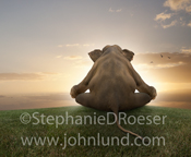 A funny elephant, seen from behind, meditates in the lotus position at sunset in a funny and cute elephant photo.