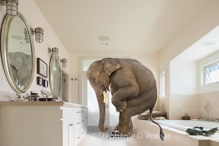 This funny elephant stands on a bathroom scale in a stock photo parody about people and their unrealistic weight expectations.