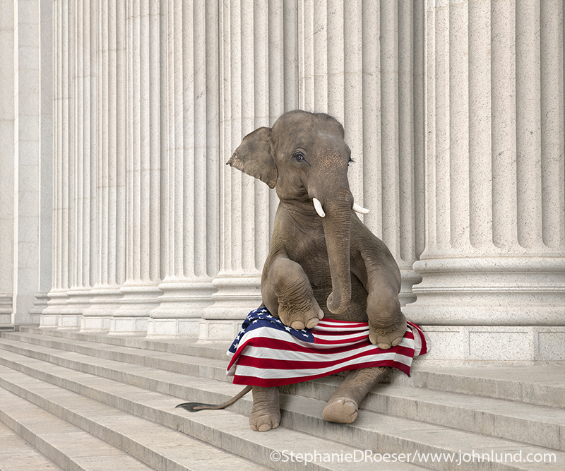 The elephant pictured here is obviously a symbol for the republican party with the American Flag on her lap as she sits on the steps of Corporate America.
