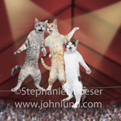 Picture of three cats on a tightrope and singing in a circus tent in a funny greeting card image.