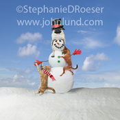 A cat and two dogs work together to build a snowman in this funny animal photo from John Lund's Animal Antics collection.