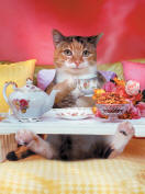 A cuddley cute Cat lays in bed having breakfast on a tray in this funny animal and pet picture - An animal antics picture