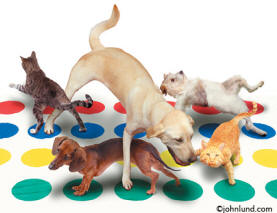 Funny animal pictures and stock photo of pets, cats and dogs, playing twister.