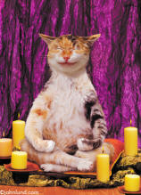 Funny animal picture of a cat meditating for a funny maternity tshirt