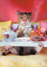 A cuddley cute Cat lays in bed having breakfast on a tray in this funny animal and pet picture - An animal antics picture for maternity Tees