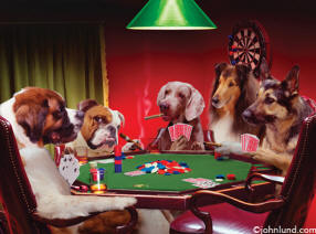 five dogs playing poker together - Great funny photo for imprinted doggie T-shirts
