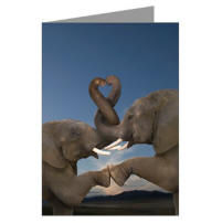 wild and crazy elephant heart greeting card