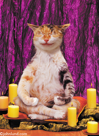 Funny animal picture of a cat meditating.