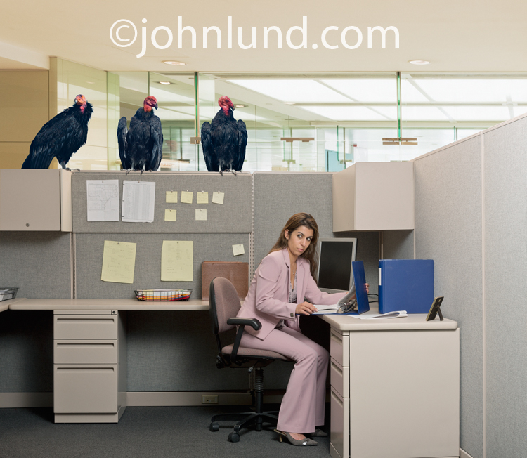 The concept of business gloom and doom, and potential failure, is illustrated by this photo of a woman working in her office while vultures sit above her on the cubicle walls.