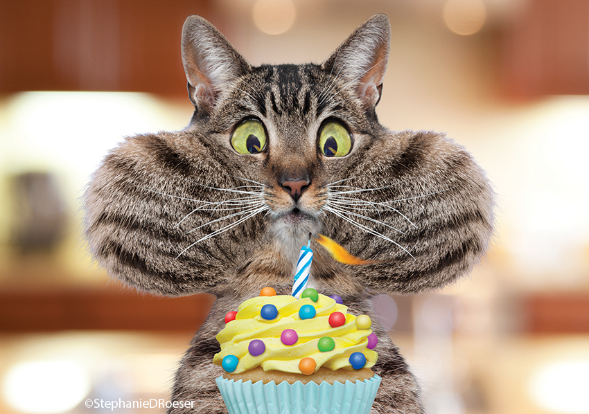 Happy St Birthday Funny Cats