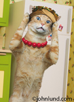 A cat wears a necklace and a hat and stands in her kitchen kvetching about her Feng Shui