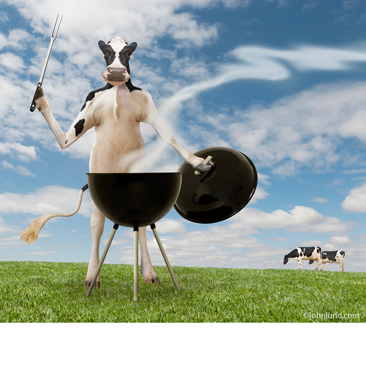 In this funny cow picture a Holstein dairy cow stands behind a barbecue with fork in hand while in the background two of his bovine friends graze in the pasture.