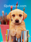 Stock photo of a puppy in a paint can; The cutest little puppy ever hangs his paws over the side of the can and looks right at us with those big brown eyes.