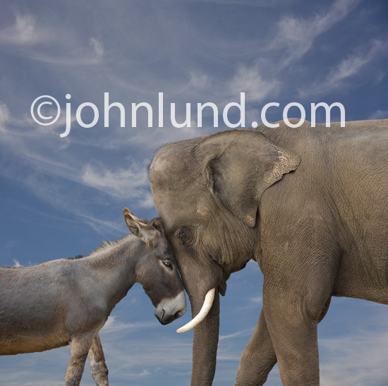Funny LOL elephant photo showing a donkey head-to-head with an elephant representing the classic and ongoing struggle of the democrats against the republicans.
