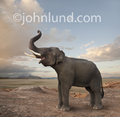 An elephant stands in front of a vast plain lifting his head and trumpeting in this fanciful photo.