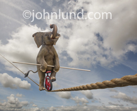 In this funny elephant picture the huge mammal rides a unicycle, on a tight rope, while using a long pole to maintain his balance.