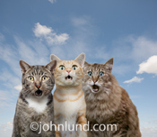 Three cats stare out with expressions of amazement and wonder in a funny feline photo.